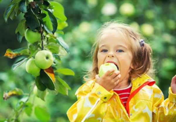 Девочка сорвала с дерева яблоко и кусает его