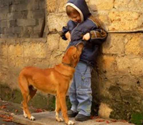 Ребенок напуган, рядом стоит собака