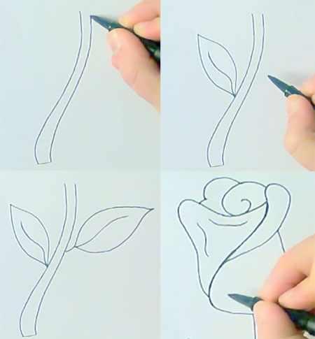 Поэтапный рисунок розы