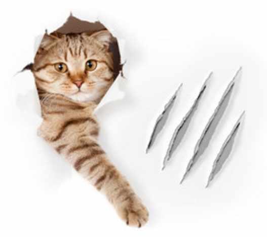 Кот выглядывает через дырку в бумаге, рядом следы от его царапин