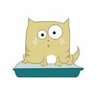 Кот сидит в лотке