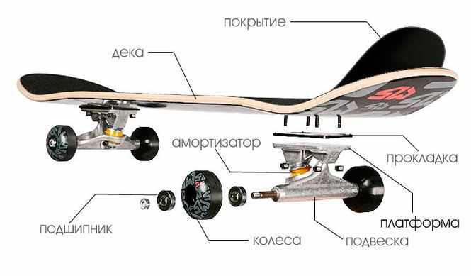 Схема строения скейтборда