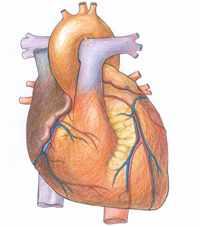 Картинка сердца