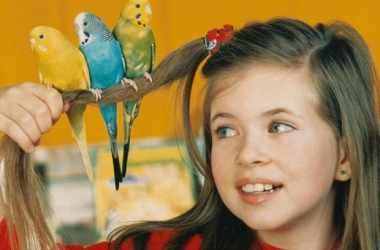 Пение птиц объясняет, как дети учатся говорить