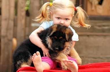 Что, если дошкольник обижает животных?