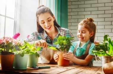 Простые способы очистить дом от токсинов