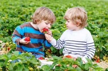 Как ежедневно развивать у ребенка доброту