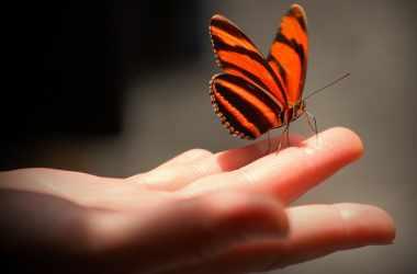 Чему мы можем научиться у бабочки